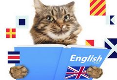 Бесплатный комплект материалов по изучению английского языка